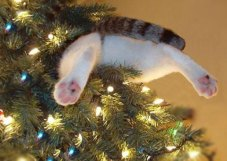 funny-pictures-cat-is-stuck