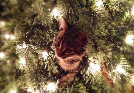 kitten-in-tree