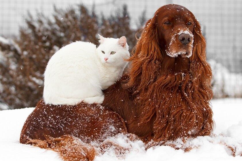 cat dog snuggle in snow bff