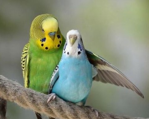 true birdy love