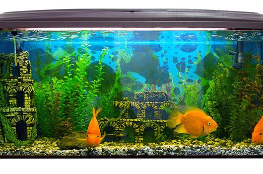 dco aquarium poisson
