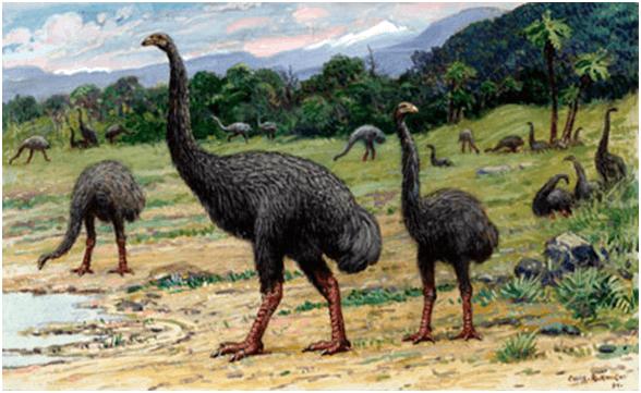 Moa- The Extinct Bird