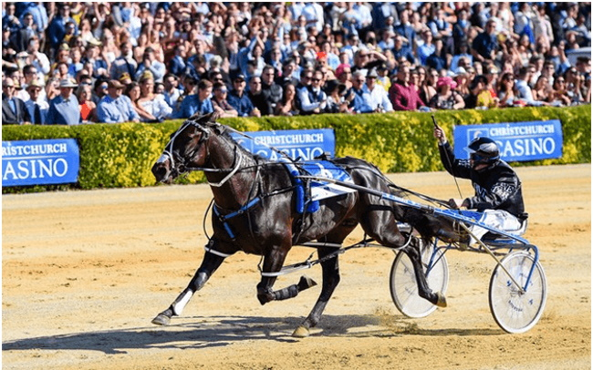 Trotting Cup at Christ Church Casino
