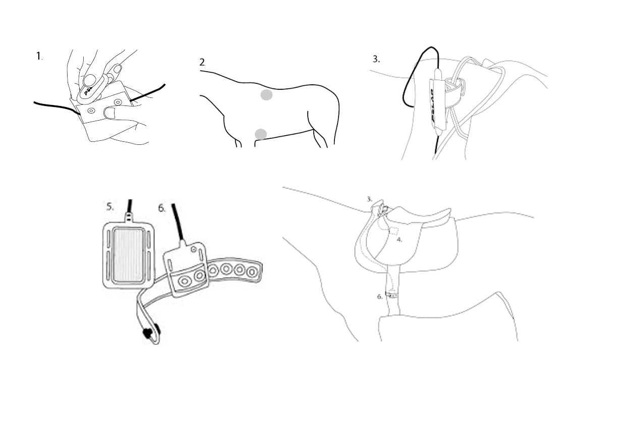 POLAR elektrody Equine