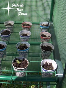 Photo of more veggie/herb sprouts