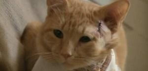 gato02 300x145 - Gato leva tiro e salva a vida de menino de três anos