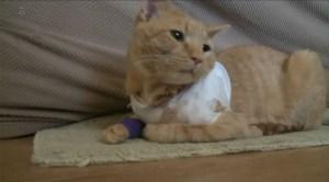 gato03 300x166 - Gato leva tiro e salva a vida de menino de três anos