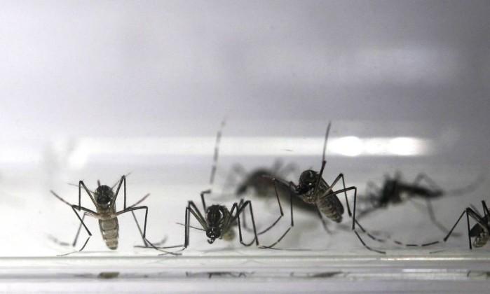 mosquito - O medo do zika vírus é exagerado? - Por Nuno Rodriguez