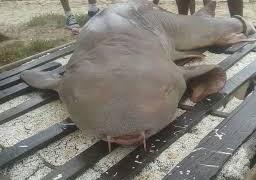 Pescador que pescou tubarão-lixa na orla de João Pessoa é identificado e preso – SAIBA PORQUE !