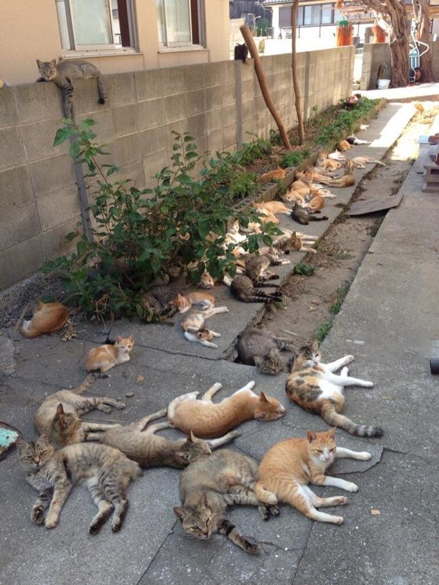 gatos 3 - Ilha no Japão tem mais habitantes gatos que humanos