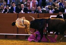 Toureiro sendo chifrado nas nádegas ao encarar um touro de meia tonelada conquista a interne – VEJA VÍDEO