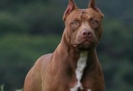 VEJA VÍDEO: Polícia é chamada para resgatar pitbull que foi 'esquecido' em carro