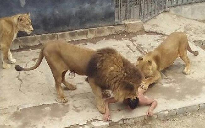 leaoparque1 - Estela Bezerra jogou Célio Alves aos leões, como se estivesse se livrando de algo contaminado - Por Milton Figueiredo