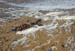 Imagens de suposto corpo de sereia encontrado praia intriga internautas