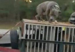 Veja Vídeo: cachorro é levado acorrentado sobre carro nos EUA