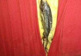 Vigilância Sanitária acha peixes podres na parede de cinema