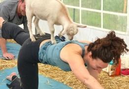 VEJA VÍDEO: ioga com cabritos é o mais novo sucesso