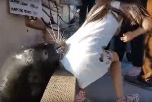 eucfnhbjjl2lq2paa4z0u90z5 300x201 - Menina puxada por leão-marinho está com infecção rara; veja vídeo