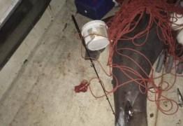 VEJA VÍDEO: tubarão branco de 200 quilos salta dentro de barco e ataca pescador