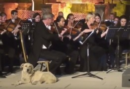 VEJA VÍDEO: Cachorro invade apresentação de orquestra e viraliza na Internet