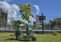 Prefeitura de João Pessoa faz replantio de árvores nativas