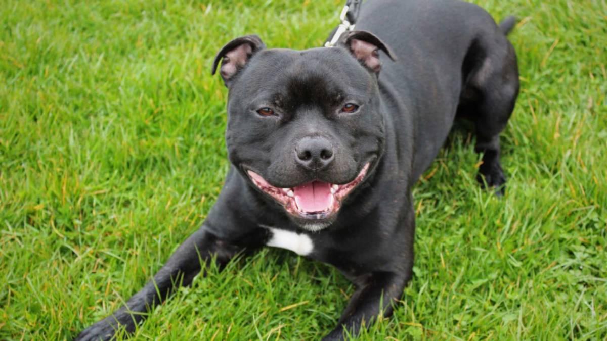 naom 58dbc0b6d69cb - Cão mata dono após consumir crack em gravação de documentário da BBC