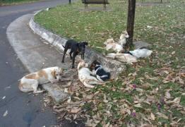 Nove cães são amarrados em poste e um morre enforcado