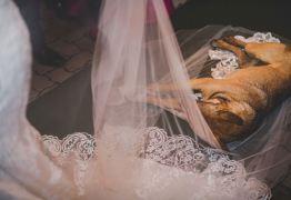Cachorro invade casamento, deita no véu da noiva e viraliza na internet – VEJA VÍDEO