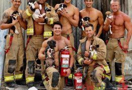 Bombeiros australianos posam com animais para a caridade, e a internet pega fogo