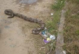 Moradores encontram cobra de quase três metros em bairro de João Pessoa