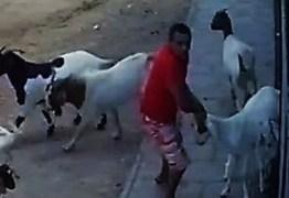 VEJA VÍDEO: Câmera flagra homem roubando bodes em cidade paraibana