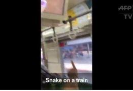 VEJA VÍDEO: Homem mata cobra com as próprias mãos dentro de vagão de metrô