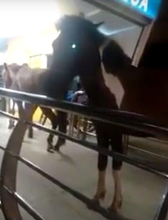 kui 5357622 - Homem tenta entrar com três cavalos em ônibus no Rio; assista