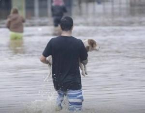 cachorro 300x233 - Santa Catarina registra três mortes e reforça estado de alerta