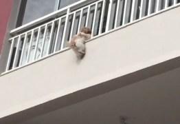 Moradores de prédio se unem para salvar cadela que caiu de janela