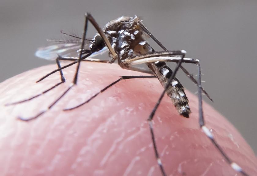 aeds dengue zika fp00761 e1448660675107 840x577 - Fapesp desenvolve método capaz de detectar anticorpos do vírus Zika