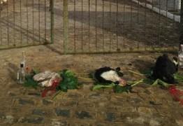 IMAGENS FORTES: bode esquartejado é deixado com bebidas em portão de cemitério em Serra da Raiz