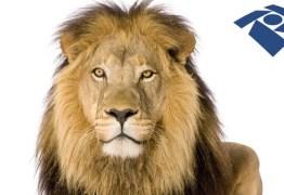 IMPOSTO DE RENDA: Descubra quais as principais novidades e fuja do leão