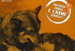 ABRIL LARANJA: Mais de 30 cães mortos em Igaracy e ONG em João Pessoa resgata mais de 90, nesse mês campanha conscientiza sobre maus tratos contra animais