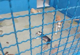 CRUELDADE: Gestão do prefeito da cidade de Sousa é acusada de maus tratos a cães; veja fotos