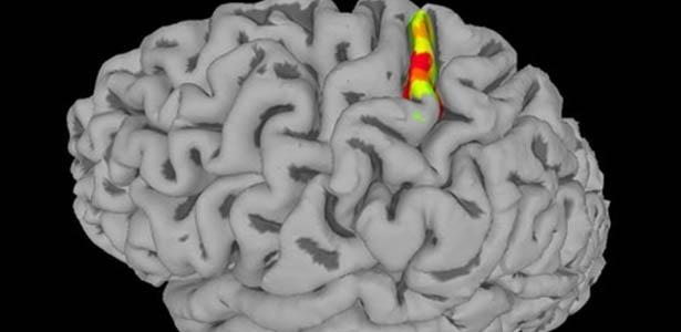 imagem destaca o cortex somatossensorial - Implante no cérebro faz tetraplégico sentir toque e movimento nos braços