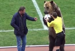 VEJA VÍDEO: Urso chama atenção em jogo na Rússia e pode participar da Copa