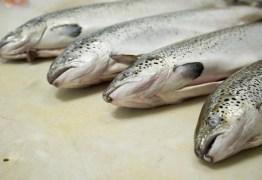 Depois do frango, europeus anunciam embargo às importações de pescado do Brasil