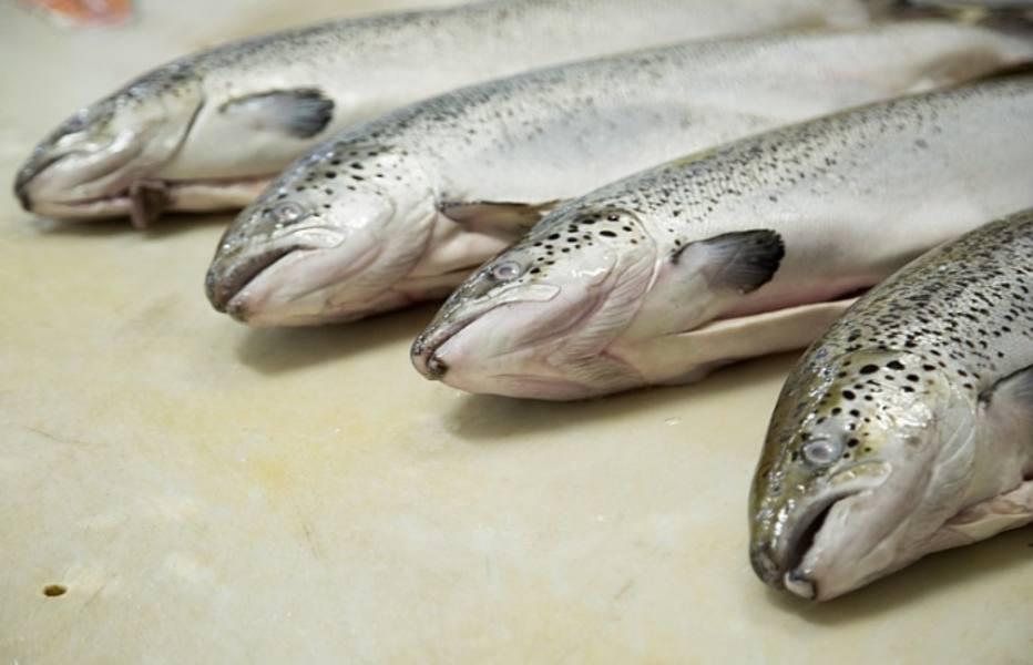 1409619354576 - Depois do frango, europeus anunciam embargo às importações de pescado do Brasil