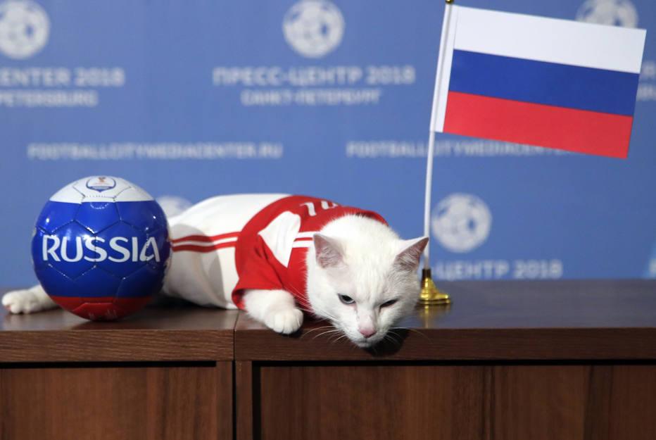 1528898129966 - Começou! Novo vidente da Copa do Mundo, gato Aquiles estreia série de previsões