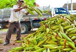 São João: comerciantes reclamam de baixa procura por milho em mercados