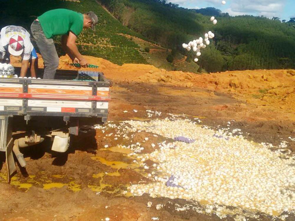 Ovos jogados fora - pintinhos nascem em aterro após o descarte de centenas de ovos estragados -VEJA VÍDEO
