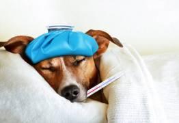 Cães podem ser responsáveis pela próxima pandemia de gripe