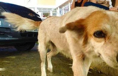Capturarj - FIDELIDADE: Cadela espera há uma semana na porta de hospital por dono que morreu