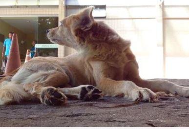 Capturarq 1 - FIDELIDADE: Cadela espera há uma semana na porta de hospital por dono que morreu